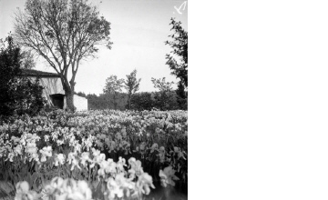 Ανθισμένος κήπος σπιτιού. Γύρω στα 1935 Έλλη Παπαδημητρίου (ΦΑ_19_649)