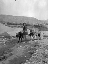 Βοϊδάμαξα. Μακεδονία, γύρω στα 1935 Έλλη Παπαδημητρίου (ΦΑ_19_727)