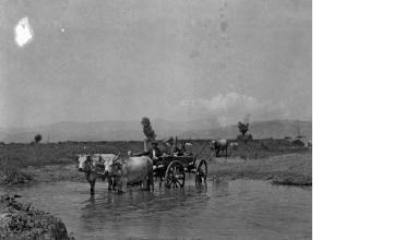 Βοϊδάμαξα. Μακεδονία, γύρω στα 1935 Έλλη Παπαδημητρίου (ΦΑ_19_728)