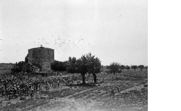 Μετόχι. Χαλκιδική, γύρω στα 1935 Έλλη Παπαδημητρίου (ΦΑ_19_735)
