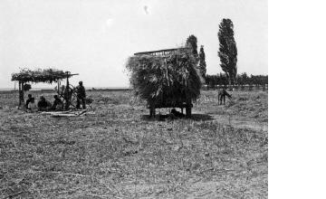 Συγκομιδή σιταριού. Χαλκιδική, γύρω στα 1935 Έλλη Παπαδημητρίου (ΦΑ_19_742)