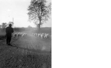 Βοσκός με κοπάδι πρόβατα. Μακεδονία, γύρω στα 1935 Έλλη Παπαδημητρίου (ΦΑ_19_759)