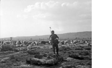 Βοσκός με κοπάδι πρόβατα. Μακεδονία, γύρω στα 1935 Έλλη Παπαδημητρίου (ΦΑ_19_760)