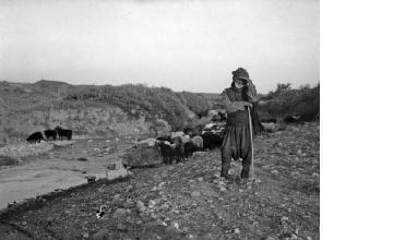 Βοσκός με κοπάδι πρόβατα. Μακεδονία, γύρω στα 1935 Έλλη Παπαδημητρίου (ΦΑ_19_761)