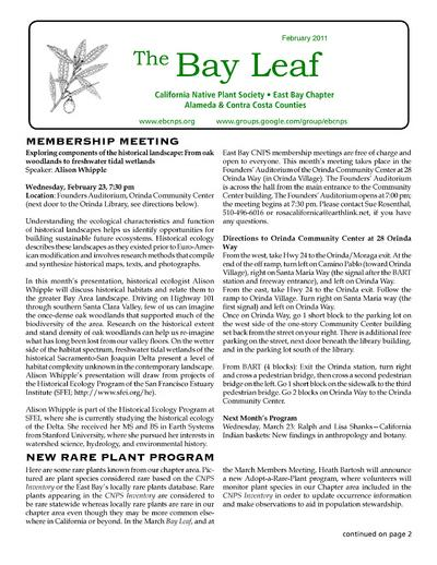 The Bay leaf.