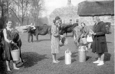 Siužetinė. Kolūkietės melžėjos prie karvių fermos, įrengtos Apaščios dvaro ūkiniuose pastatuose. Melžėjos (dešinėje stovi fermos vedėja Aldona Šiaučiūnaitė - Paliulionienė) pozuoja fotografui, rodydamos darbo procesą. Aldona Paliulionienė, fotografo Romo Paliulionio žmona, pasakojo, kad pačios melžėjos pasikvietė jos vyrą nutraukti. Apaščios dvare, sode, buvo ir medinis gyvenamasis pastatas.