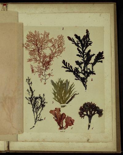 Raccolta di alghe di diverse isole del Polo Artico accompagnata da una lettera dedicatoria al Papa Pio IX