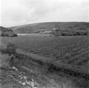Vue d'ensemble, prise depuis le sud, de l'emplacement du site (sondages exploratoires sous la direction de M. Moliner) (La Grande Pièce, Flassans-sur-Issole, Var).
