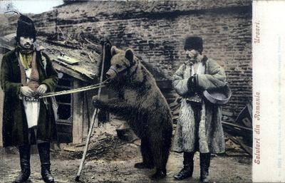 Salutari din Romania Ursari