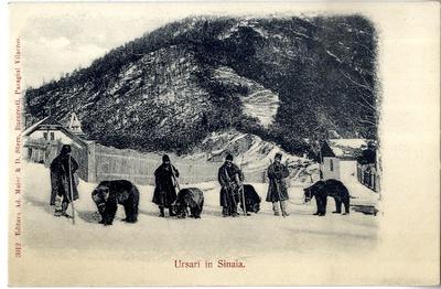 Ursari in Sinaia