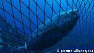 Spanien: Thunfisch für Mitsubishi