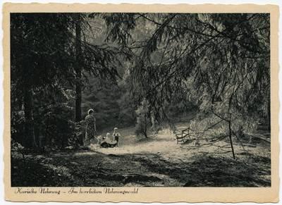 Kurische Nehrung - Im herrlichen Nehrungswald / Fotogr. Fritz Krauskopf. - 19?