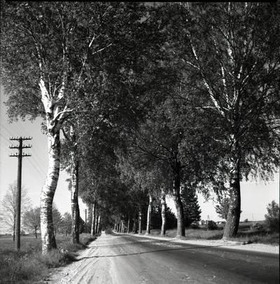 [Kelias į Vanagus – rašytojos Ievos Simonaitytės gimtinę] / Bernardas Aleknavičius. - 1979.VI