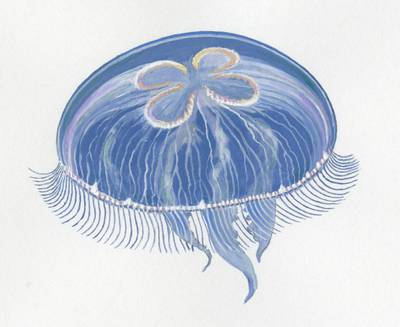 Saulius Karalius. Ausytoji medūza. 2013