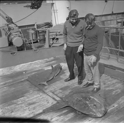 Bernardas Aleknavičius. Žvejybos laive neįprastas laimikis. 1975
