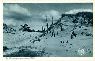 Fricas Krauskopfas. Im Dünensand versunkener Wald. 1950
