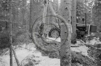 Keto 50-kuormainharvesteri ja Joutsa 50 X-puomi puunkorjuussa. Edessä puun rungon ympärille sidottu leimikon merkintänauha.