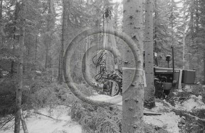 Keto 50-kuormainharvesteri ja Joutsa 50 X-puomi puunkorjuussa. Massey Ferguson-traktori. Edessä puun rungon ympärille sidottu leimikon merkintänauha.
