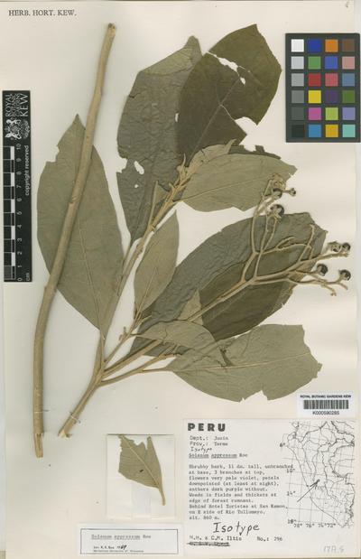 Solanum appressum K.E.Roe