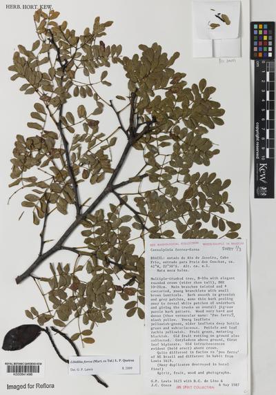 Libidibia ferrea (Mart. ex Tul.) L.P.Queiroz