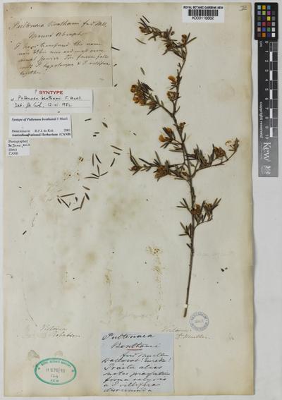 Herbarium Hookerianum 1867; associated with K000118881; [note in Mueler's handwriting reads:]