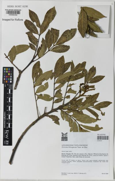 Ormosia friburgensis Taub. ex Glaz.