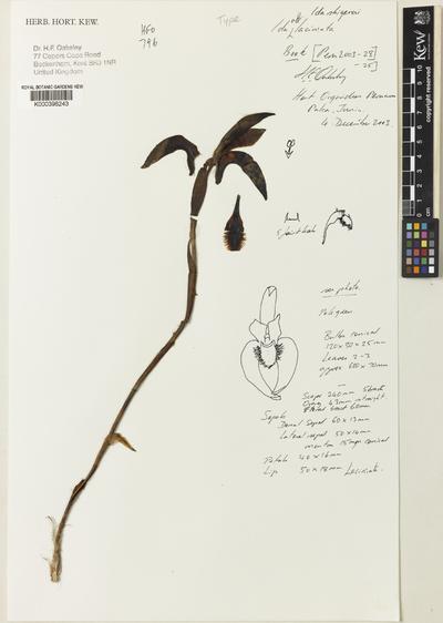 Sudamerlycaste shigerui (Oakeley) Archila