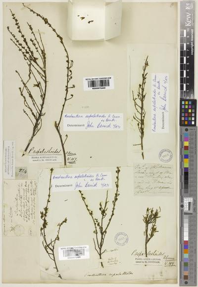 Prostanthera aspalathoides A.Cunn. ex Benth.