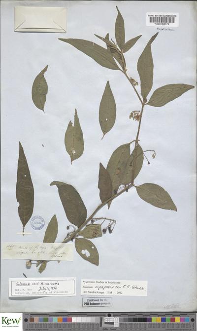 Solanum apaporanum R.E.Schult.