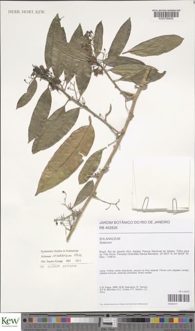 Solanum inodorum Vell.
