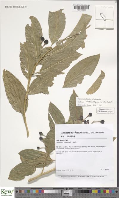 Solanum pseudoquina A.St.-Hil.