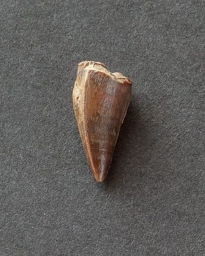 Fitozauro dantis