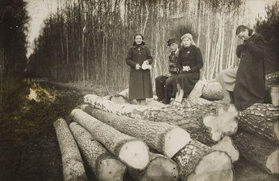 """Nuotrauka """"Miško kirtimo darbai Žeimelio miške"""""""