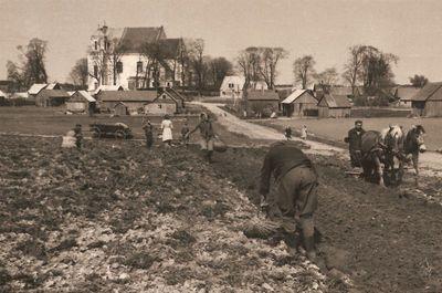 Bulvių sodinimas Kražių parapijos žemėje