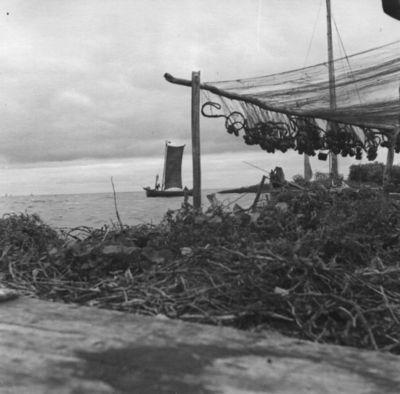 Žvejų tinklai Kuršių marių pakrantėje