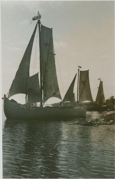 Trys kuršvaltės Kuršių marių pakrantėje