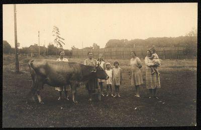 Moterys ir mergaitės prie karvės
