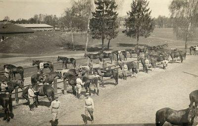 Arklių priežiūros darbai prie Saratovo kareivinių