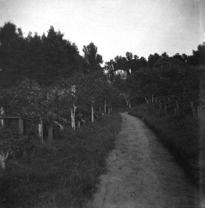 Kelias į buvusio Varvaros (1855–1935) ir Grigorijaus (1835–1905) Puškinų Markučių dvaro sodybos namą