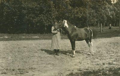 ŽŪA dvaro veislinis žirgas (žemaitukas, skirtas kergimui)