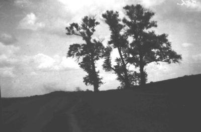 Buvusios Markučių dvaro sodybos gamtovaizdis