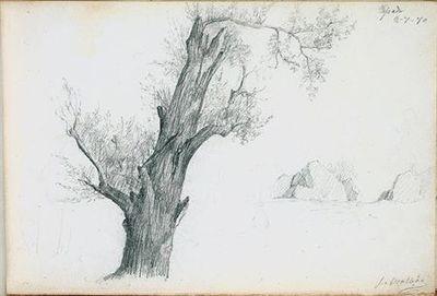Árvore em primeiro plano. No canto superior direito, está escrito Tapada (desenho n.º 20 do álbum).