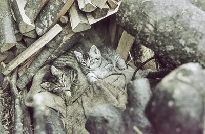 [Primer plano de dos gatos tumbados en un saco junto a la leña]