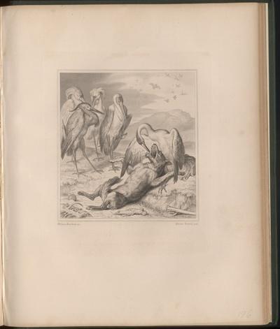 Der Kranich steckt Reineke Fuchs seinen Schnabel ins Maul
