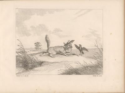 Reineke Fuchs schnappt nach der der Krähe Scharfenebbe