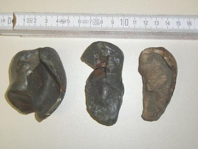 Gehörsteine (Otolithen) von Walen