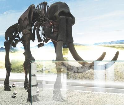 Wollhaarmammut (Ahlener Mammut)