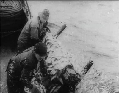 Sildefiske ca. 1914