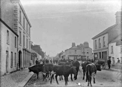 Cattle fair, Ardee, Co. Louth