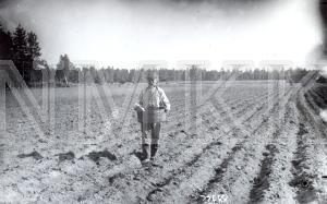 Fotonegatīvs. Sējējs uz lauka Talsu apriņķa Lubezeres pagasta Rojas ciemā.